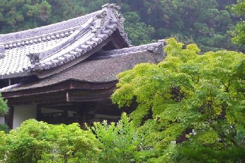 屋根と新緑