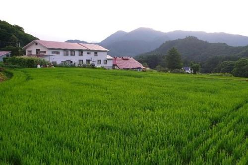民宿と水田